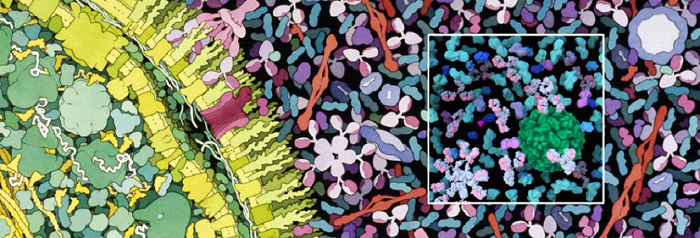 Watercolor illustration by David Goodsell with 3D rendered inset by Arthur Olson, Molecular Graphics Lab, The Scripps Research Institute.